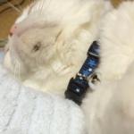 うちの猫の顎に猫ニキビができた 飼い主に出来る治療法は?